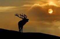 La fotografia naturalistica e presentazione libro Un cuore tra i lupi – Bologna 4 dicembre 2013