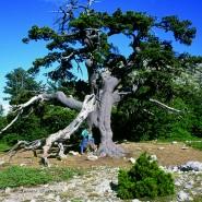 Parco nazionale del Pollino – Il parco più grande d'Italia