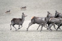 A caccia di cervi anche di notte