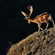 La luce nella fotografia naturalistica