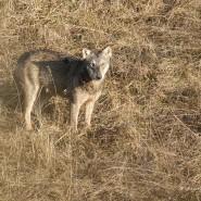 Il lupo che voleva giocare