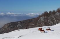 Cavalli d'inverno al Piano del Toscano