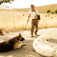 Pastori e lupi in Basilicata