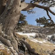Il parco nazionale del Pollino, come arrivare