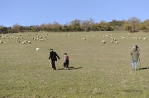 Il nonno pastore