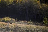 Habitat del lupo