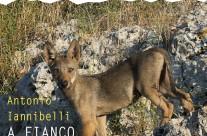 A fianco dei lupi – Presentazione al MUSE di Trento
