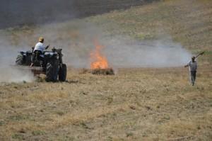 Prima di arare i terreni le stoppie vengono bruciate