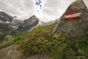 I ghiacciai della Lobbia e del Mandrone