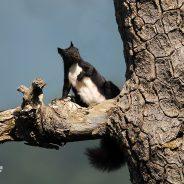Etica e fotografia naturalistica