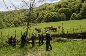 Sosta per il pranzo in compagnia delle mucche del borgo