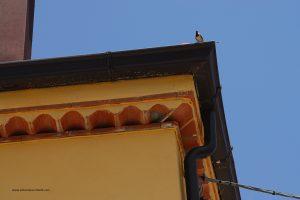 Costruzione per favorire la nidificazione dei rondoni