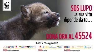 SOS Lupo WWF 2017