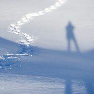 I pini loricati, la neve e il ghiaccio