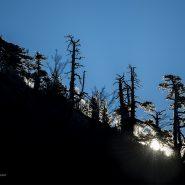 Escursione fotografica tra i pini loricati del Pollino.
