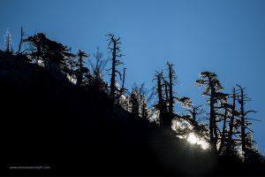 Pollino 9 dicembre 2018  alba tra i pini loricati Pinus eucodermis
