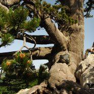 Il Pollino. Il più grande Parco d'Italia