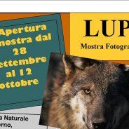 Mostra fotografica Lupi Riserva Naturale di Onferno Rimini